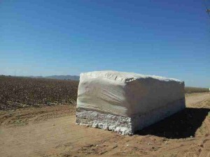 Arizona Cotton Harvest