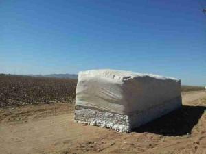 Arizona Cotton Harvest